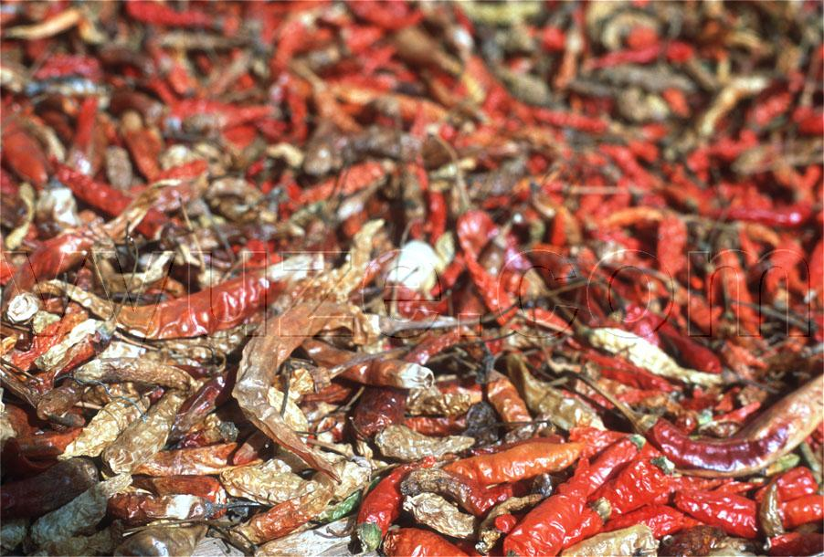 Drying chilli peppers / Location: Laos